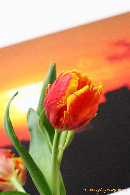 papageien tulpe, fotoleinwand, leinwandfoto
