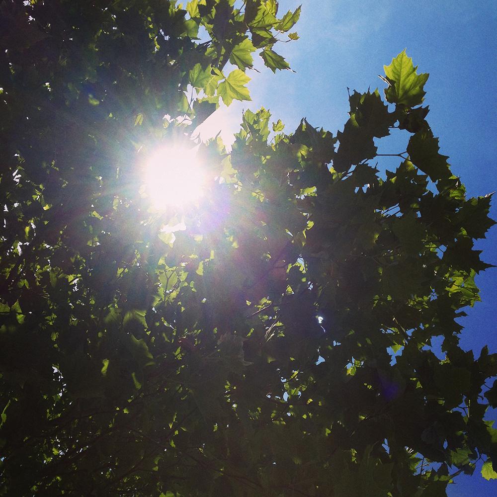 unter bäumen liegen, himmelblau, sommer ist, sonne