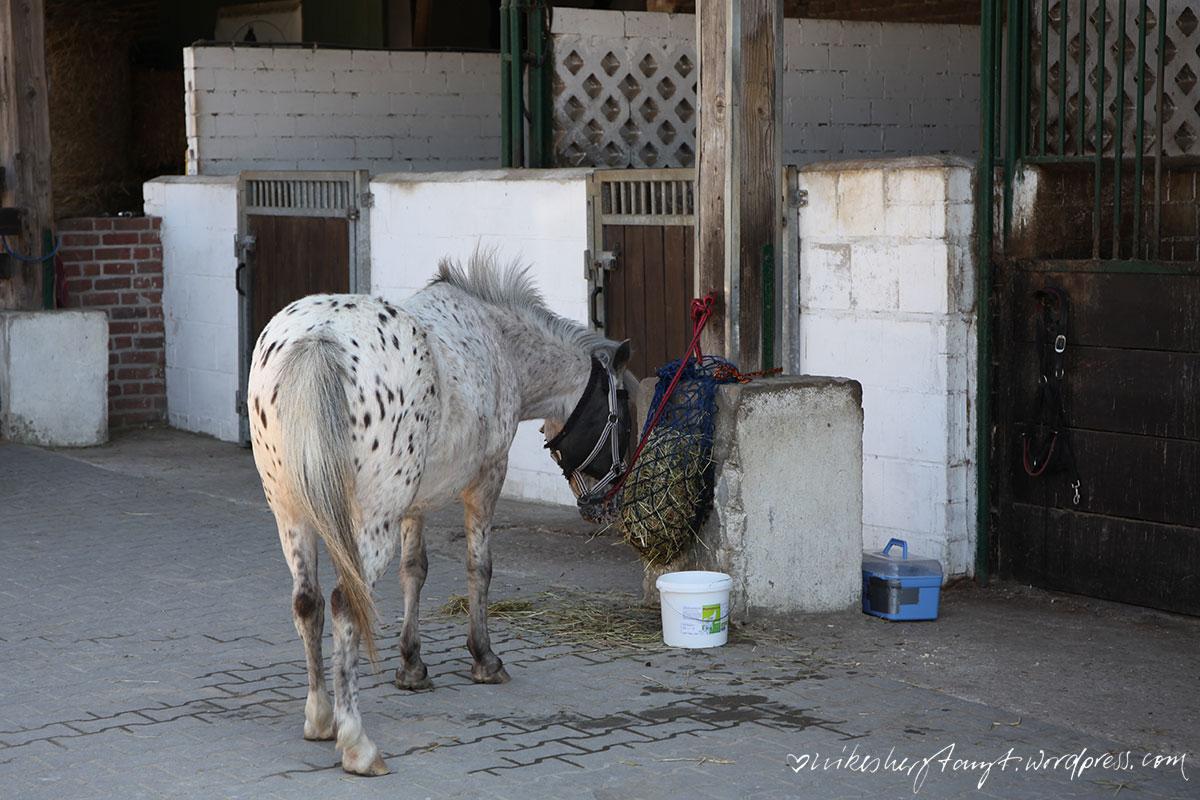 das leben ist ein ponyhof, kinderponyhof, nettetal, pferde, ponys, nikesherztanzt
