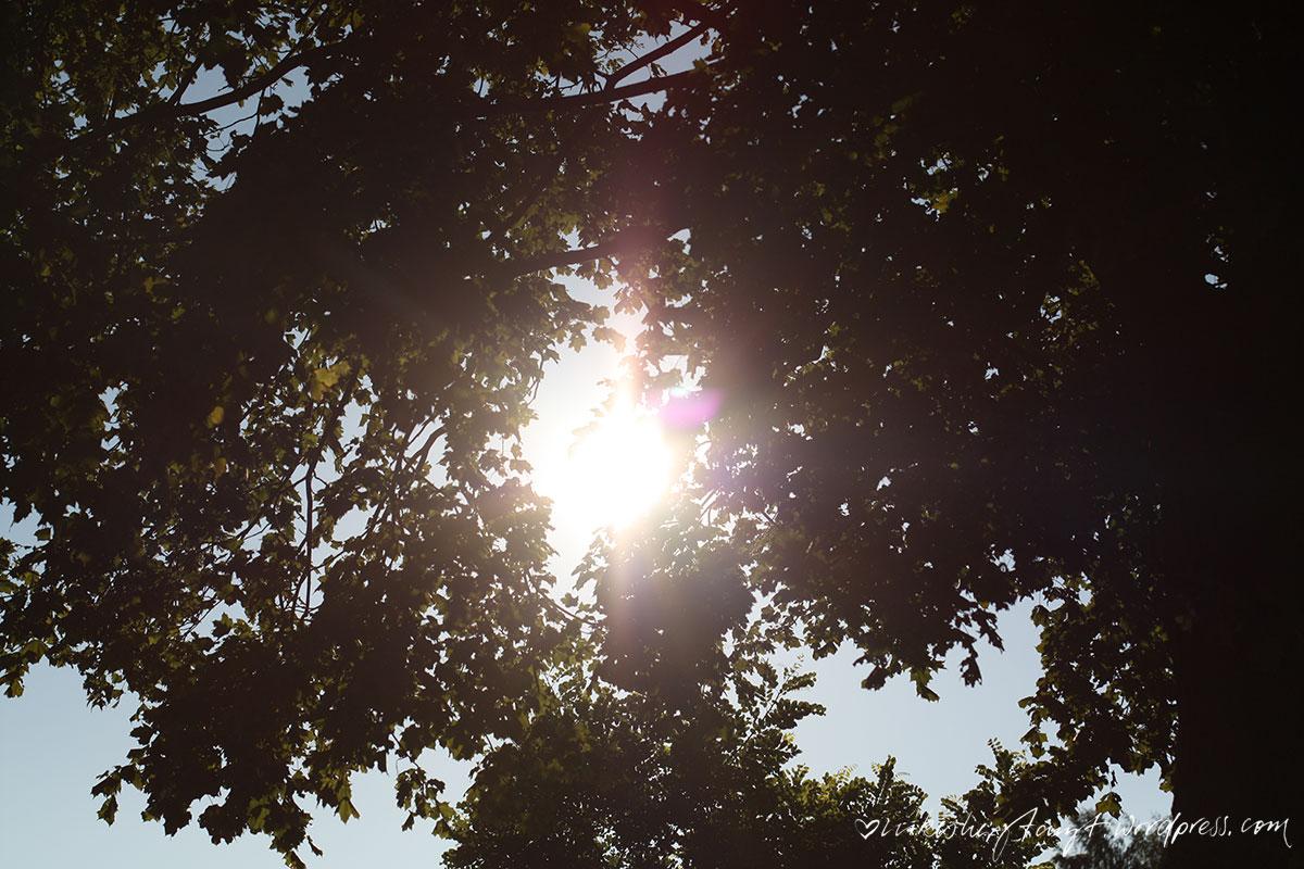 altweibersommer, #halloherbst2015, herbstsonne, abends am kanal, waltrop, datteln-hamm-kanal, natur, nikesherztanzt, im pott is schön