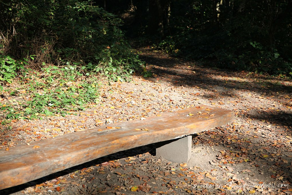 autmn leaves, goldener oktober, licht, herbst, sonne, laub, hallo herbst, 2015, krefeld, forstwald, nikesherztanzt