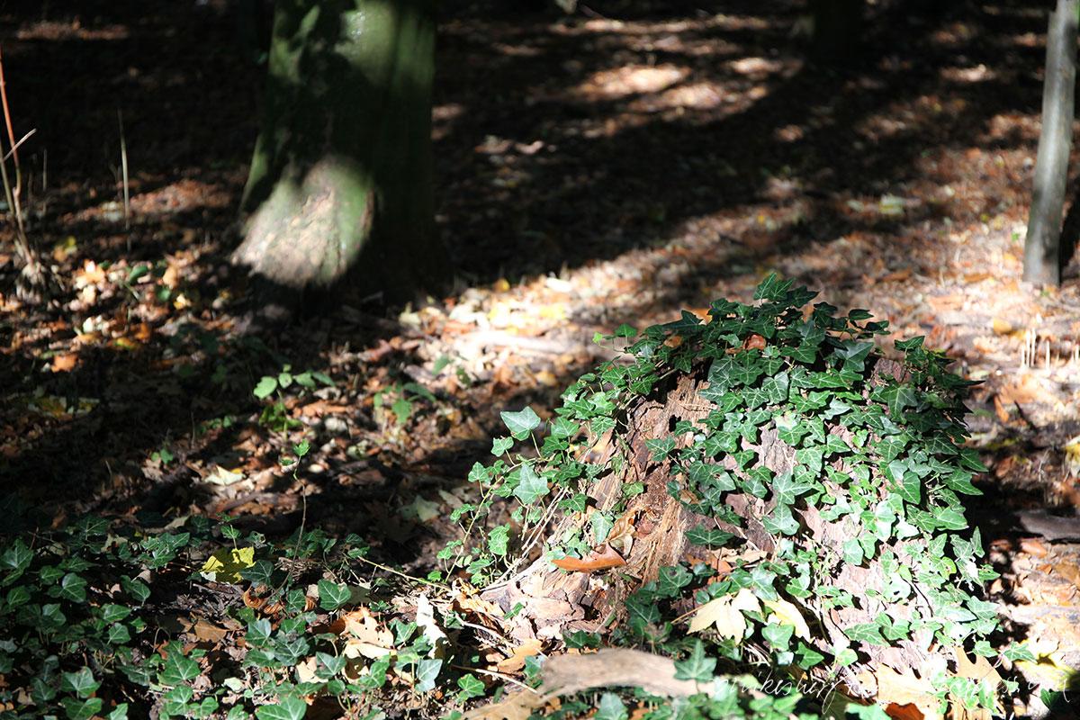 autumn leaves, goldener oktober, licht, herbst, sonne, laub, hallo herbst, 2015, krefeld, forstwald, nikesherztanzt