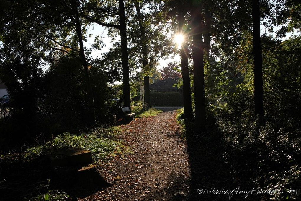 autumn leaves, waldspaziergang, goldener oktober, licht, herbst, sonne, laub, hallo herbst, 2015, krefeld, forstwald, nikesherztanzt