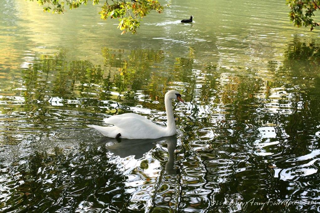 herbst im kaiserpark, krefeld, bockum, buntes laub, #halloherbst2015, herbstspaziergang, nikesherztanzt, wasser,